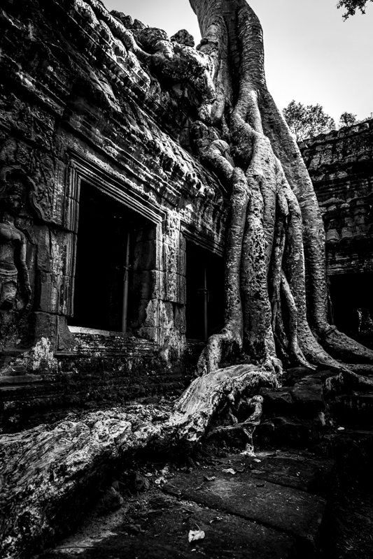 Roots | Siem Reap, Cambodia by Robert Metz