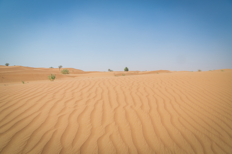 In the Desert | Dubai, UAE by Robert Metz