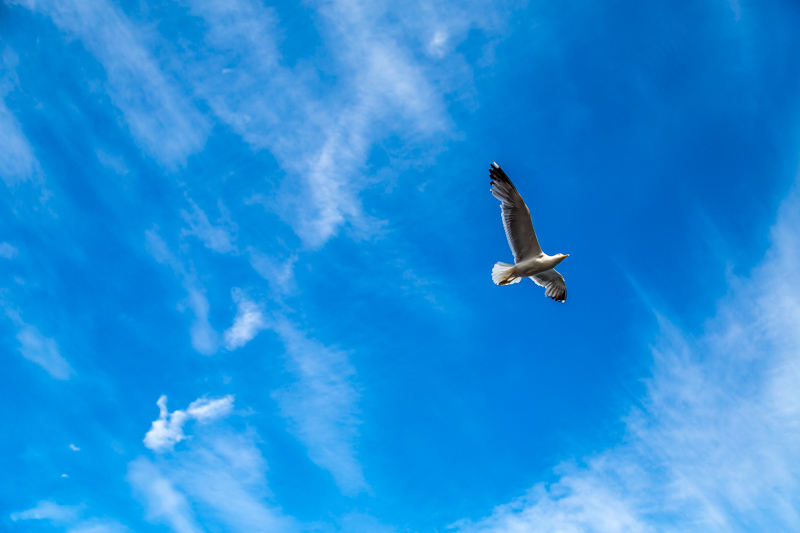 Sea Gull up in the Sky | Barcelona, Spain by Robert Metz