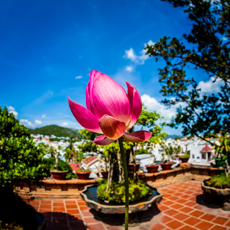 Lotus Blossom at Po Nagar | Nha-Trang, Vietnam by Robert Metz
